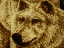 Animal Rugs Aprox 8x5ft 160x230cm Woven Wolfs Design Quality rug Bargain Prices